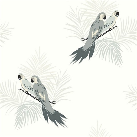 Black, Grey & White Commercial Parrot Birds Wallcovering