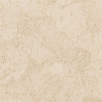 Stucco Plaster Honey Texture